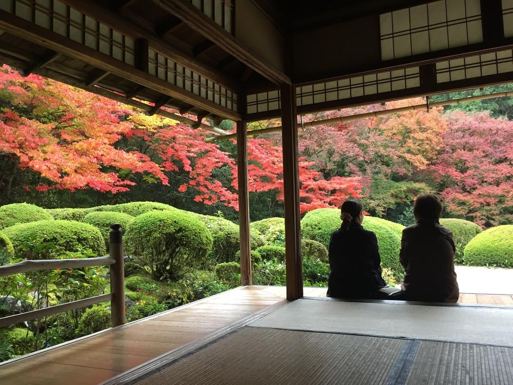 11月の京都を思いっきり味わえるおすすめスポット5選