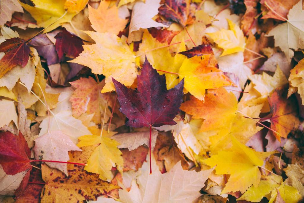 【2019年版】京都祇園から少し足を伸ばして行く紅葉スポット4選
